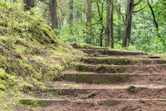 Stairs in the forest Royalty Free Stock Photos