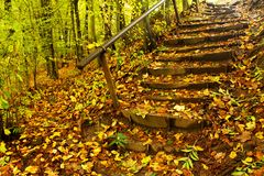 Stairs in the forest Stock Images
