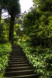 Stairs in a Forest in HDR. Stairs going up through a Japanese Forest with lush vegetation in HDR Royalty Free Stock Image