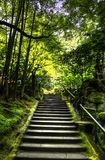 Stairs in a Forest in HDR. Stairs going up through a Japanese Forest with lush vegetation in HDR Royalty Free Stock Photography