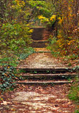 Stairs in forest Royalty Free Stock Photography