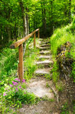 Stairs in the forest Stock Photos