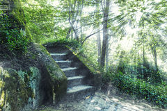 Stairs in the forest Royalty Free Stock Images