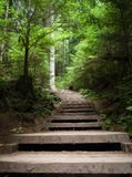 Stairs through a Forest - Vancouver. Concrete stairs through dense forest in Vancouver Royalty Free Stock Photos
