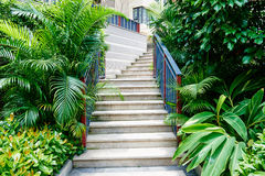 Stairs  in garden Stock Images