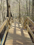 Stairs going down. To river from nature path Stock Photography