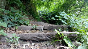 Stairs going in forest Royalty Free Stock Photography