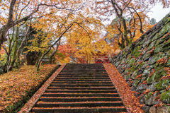 Stairs going up hill in a peaceful forest in autumn Royalty Free Stock Images