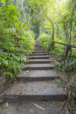 Stairs going up hillside in forest Royalty Free Stock Photo