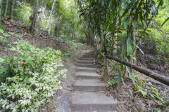 Stairs going up hillside in forest Royalty Free Stock Image