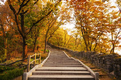 Stairs going uphill in autumn Royalty Free Stock Photos