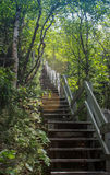 Stairs going in the woods. Endless stairs going in the woods Royalty Free Stock Image