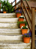 Stairs In Alpin House With Flower Pots Royalty Free Stock Photography