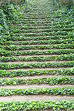 Stairs with ivy Stock Photo
