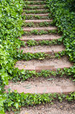 Stairs with ivy Royalty Free Stock Photos