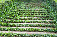Stairs with ivy Royalty Free Stock Photography