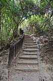 Stairs in the jungle. In erawan national park in thailand royalty free stock images