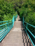 Stairs lead down to a tropical forest Royalty Free Stock Image