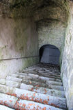 Stairs leading in an old cellar Stock Images