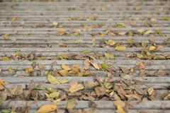 Stairs with lots of leaves Royalty Free Stock Photo