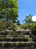 Stairs at MacRitchie Reservoir royalty free stock images