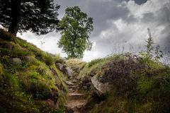 Stairs in meadow stairway to heaven tree on hill royalty free stock photography