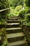 Stairs. Old stairs, dirt road home or garden overgrown with green, ferns, trees, bushes Stock Photos