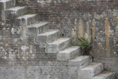 Stairs of a dry dock. The stairs of an old dry dock which is out of order. Algae, moss and plants are growing out of cracks and joints in the dry dock royalty free stock photography