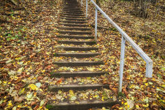 The stairs. In the old park. Picture taken in Latvia, Sigulda Stock Images