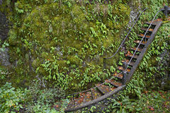 Stairs on Oneonta Gorge Hiking Trail Royalty Free Stock Photo