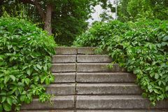 Stairs overgrown with grapevine. In a public park stock images