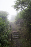 Stairs in Paranapiacaba, Brazil. Stairs in the middle of a forest in Paranapiacaba Stock Photos