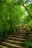 Stairs in park. Stairs in the Botanical Garden of Cluj-Napoca Stock Photo