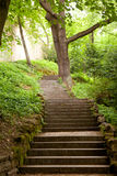 Stairs in the park Stock Image