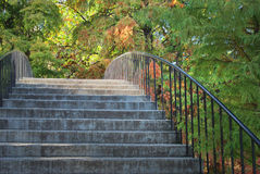 Stairs in the park. Stairway through wooden area in a park Stock Image
