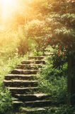 Stairs in the park Stock Photography