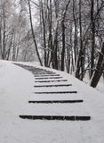 Snow-covered steps in the forest. Stairs in the Park under snow after snowfall, deep drifts, frosty weather, climb up Stock Photos