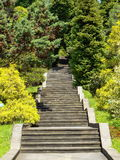 Stairs in parkland. Beautiful stairs in parkland rising to the top among the trees, Sochi city Stock Photography