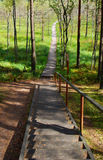 Stairs and pathway. A hiking path and a wooden stairs in the Cepkeliai woodland. Travel Lithuania, Europe Stock Image