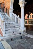 Stairs with Pigeons Royalty Free Stock Images
