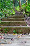 Stairs in the rainy season green forest. Stock Photography