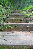 Stairs in the rainy season green forest. Royalty Free Stock Photos