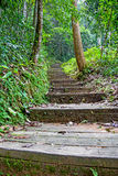 Stairs in the rainy season green forest. Royalty Free Stock Photography