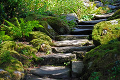 Stairs of rock. Stairs in a stone garden, surrounded by moss covered rocks and plants Royalty Free Stock Photography