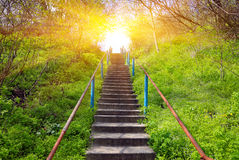Stairs in spring forest Stock Photo
