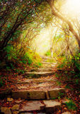 Stairs with sun beams. Morning sun rays shine on forest pathway Stock Photography