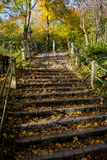 Stairs with Sunlit Steps of Cobblestones in Forest in Autumn Stock Photos