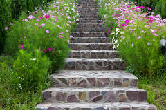 Stairs surrounded by beautifull flowers. Rock stairs surrounded by beautiful flowers Stock Image