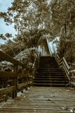 Stairs to autumn, cold afternoon stock images