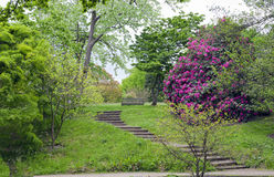 Stairs to a bench in lush english garden Stock Image